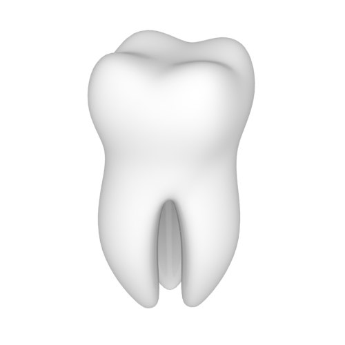 3D tooth 3 root model