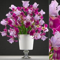 flower bouquet iris 3D model