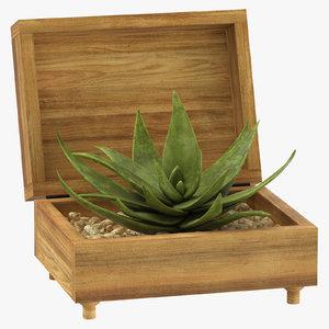 aloe box plant 3D