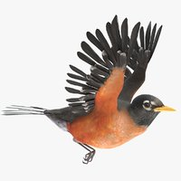 3D american robin animations