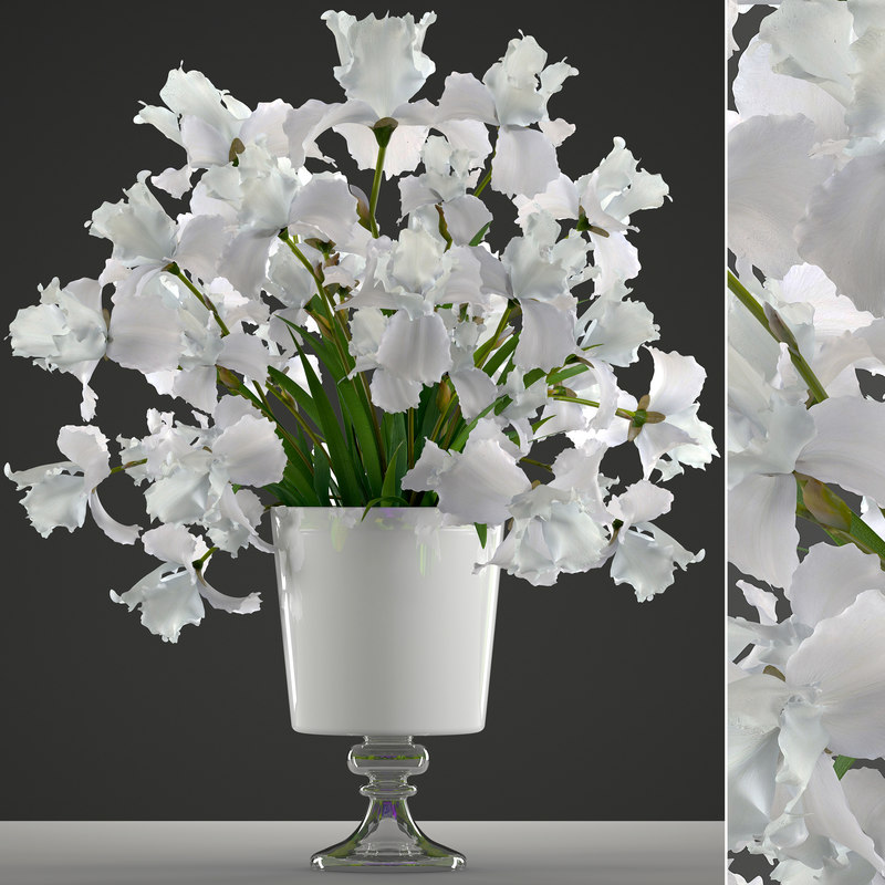 3D bouquet flowers iris