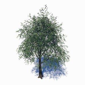 3D deciduous tree