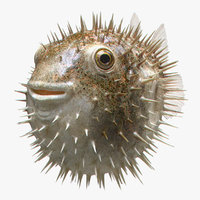 puffer fish 3D model
