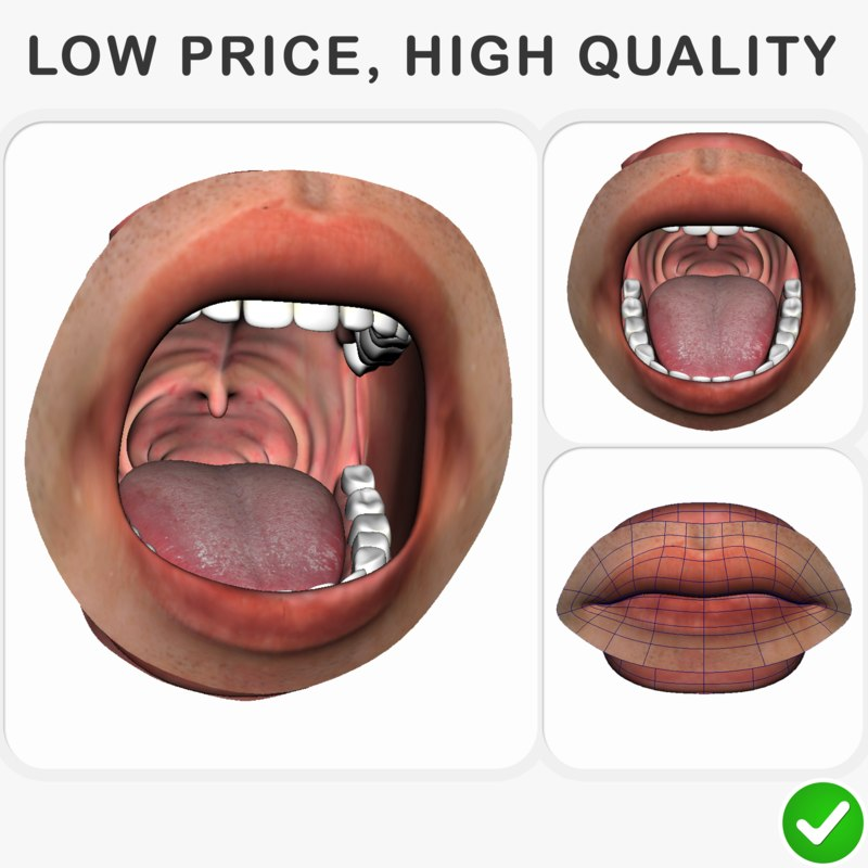 3D realistic rigged human mouth model