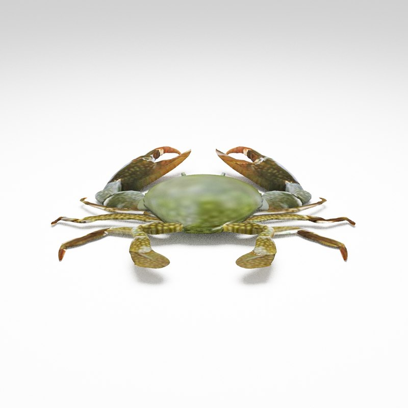 3D crabs live seafront