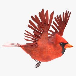 3D cardinal animations model