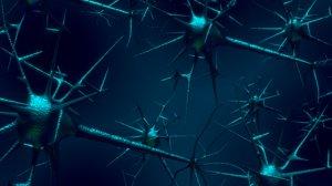 human neuron 3D model