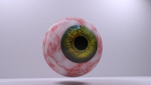 3D model eye