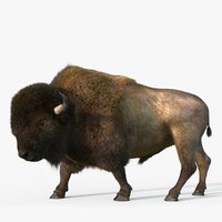 Bison Fur Rigged