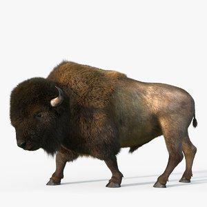 3D bison fur rig