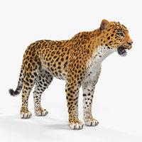3D leopard fur