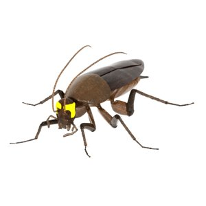 cockroach radioactive animation 3D model