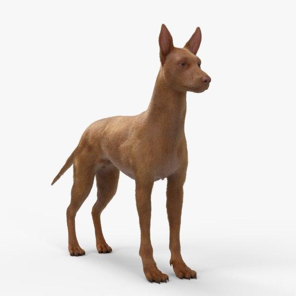 3D arnold pharaoh hound rigging model