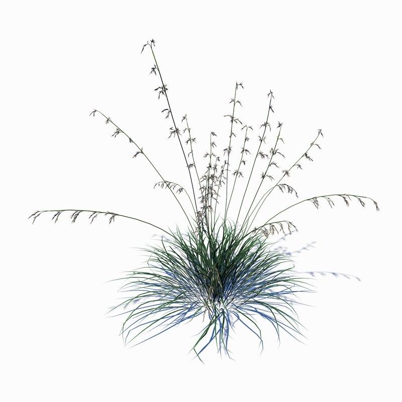 wild grass 3D