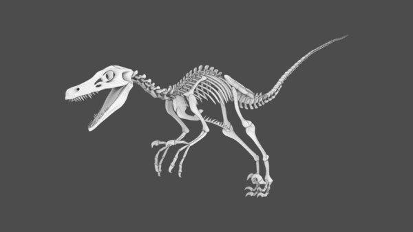 3D skeleton raptor