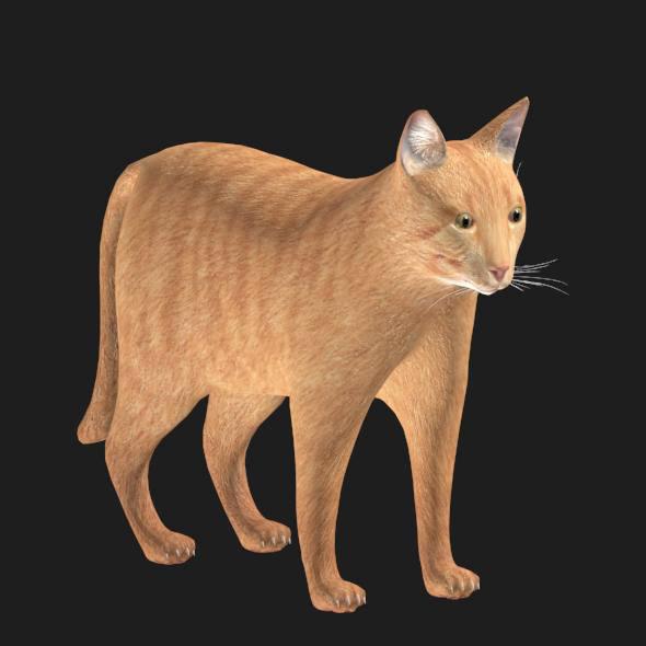 cat modeled 3D model