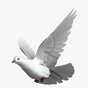 rigged white dove pigeon model
