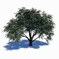 3D model dogwood tree