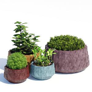 3D model agave series