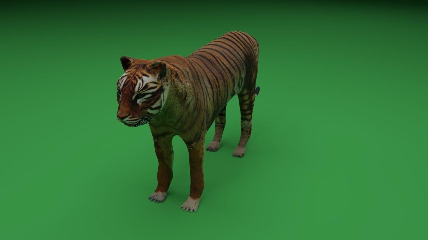 tiger wildlife animal model