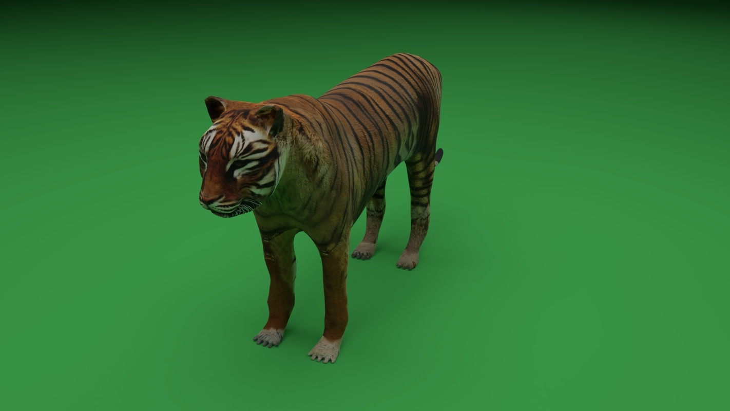 tiger wildlife animal model
