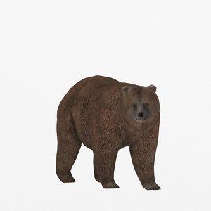 3D bear ready
