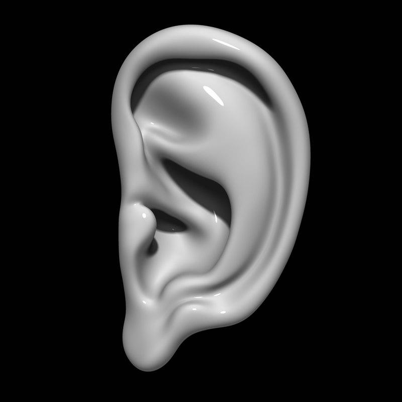 3D model ear mannequin anatomy