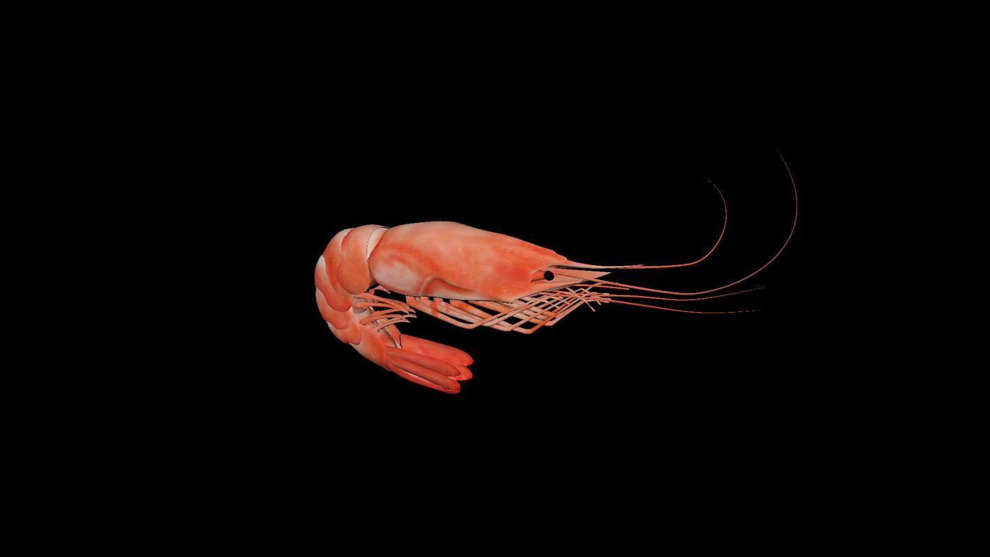 crevette shrimp 3D model
