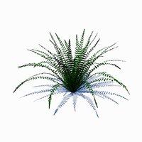 3D small fern