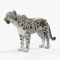 3D snow leopard fur