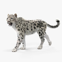 3D snow leopard walking pose model