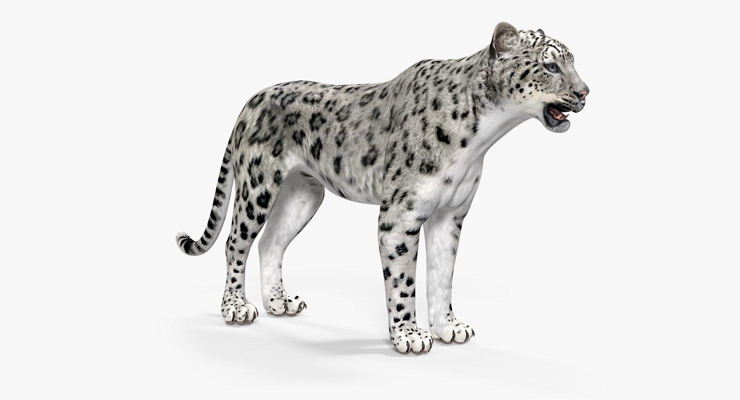 snow leopard model