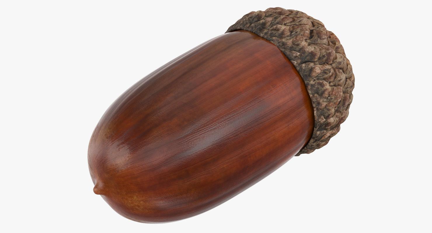 single acorn 3D model