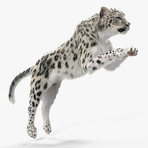 panthera uncia jumping pose 3D
