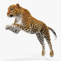 3D model panthera pardus jumping pose