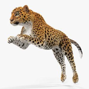 3D model panthera pardus jumping pose