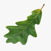 oak leaf 3D model