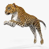 panthera pardus jumping pose 3D model