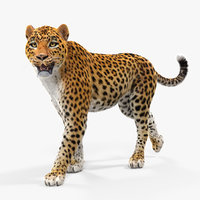 leopard walking pose fur 3D model
