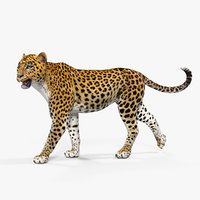 3D leopard walking pose