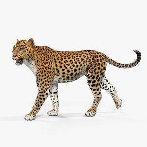 3D leopard walking pose