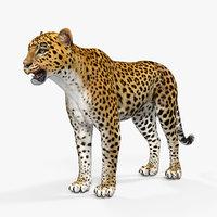 leopard 3D model