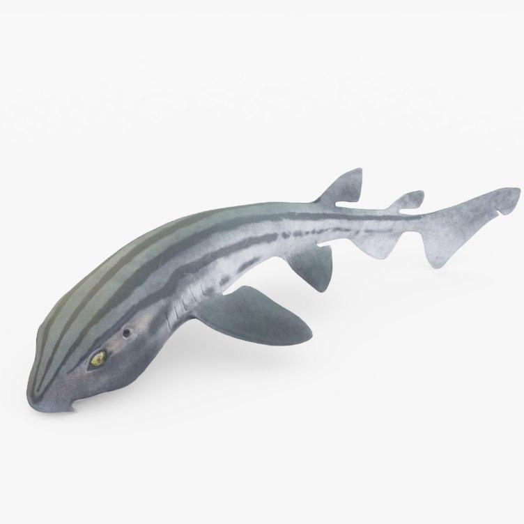 pyjama shark 3D