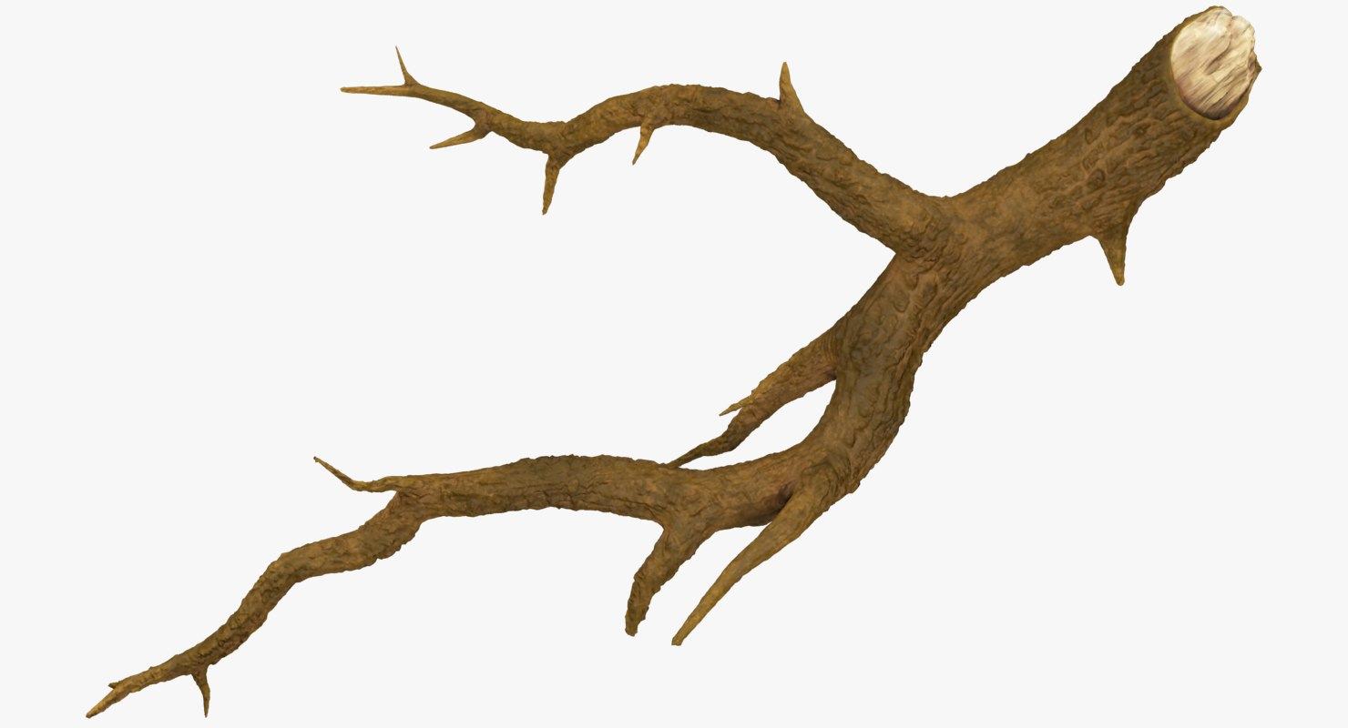 tree branch 3D