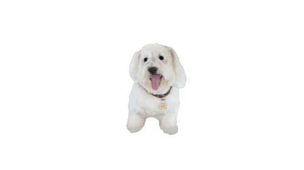 puppy 3D