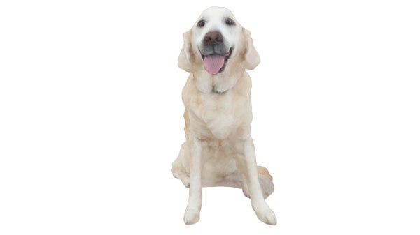 3D model golden retriever