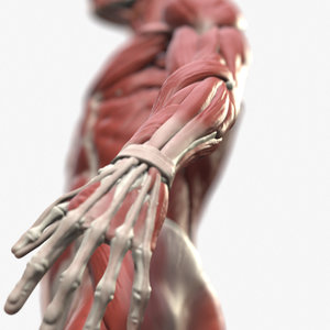 anatomical reference 3D