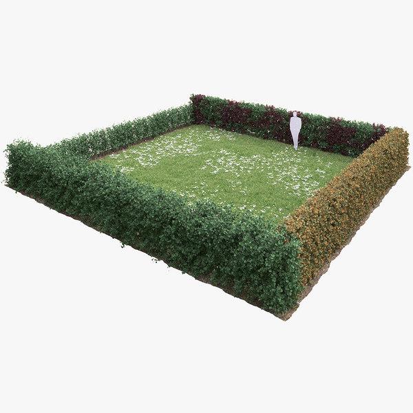 sylvatica hedge 3D model