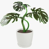 monstera pot model