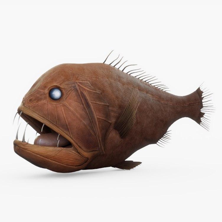 fangtooth fish 02 model